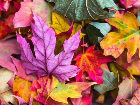 Prêts pour l'automne ?