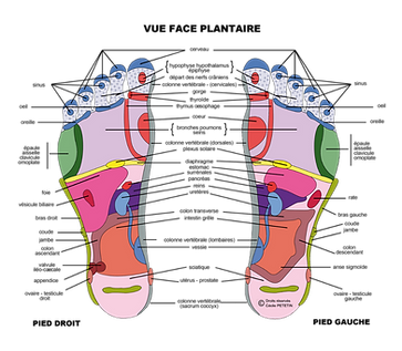 Zones reflexes des pieds