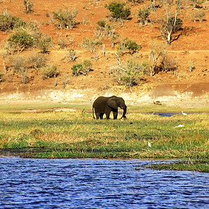 Africa - Botswana -2 galleries