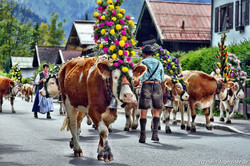Almabtrieb Festival