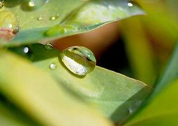 ee0cf__nature-macro-photography-3[1].jpg