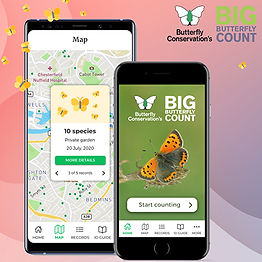 The Big Butterfly Count
