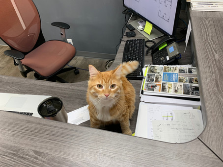 The Rising Trend of Pets at Work
