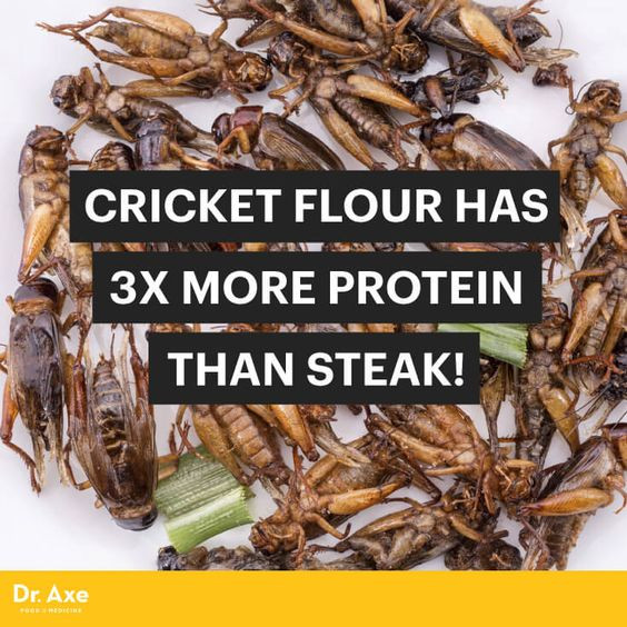 Cricket Flour Has 3x More Protein Than Steak + It Even Tastes Good