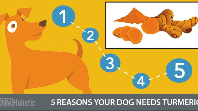 The Top 5 Health Benefits Of Turmeric For Dogs