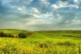 ישראל1.jpg