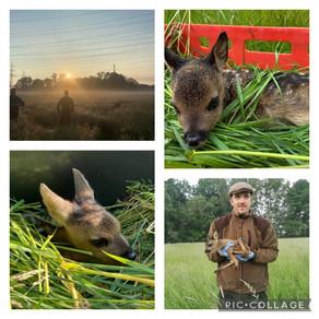 Jäger retten Wildnachwuchs mit einer Drohne