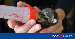 Drei blutjunge Kätzchen gerettet