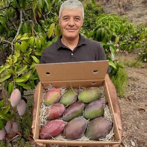 BioMangos aus Spanien