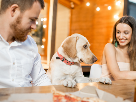 Dining with Dogs: Sonoma County Style!