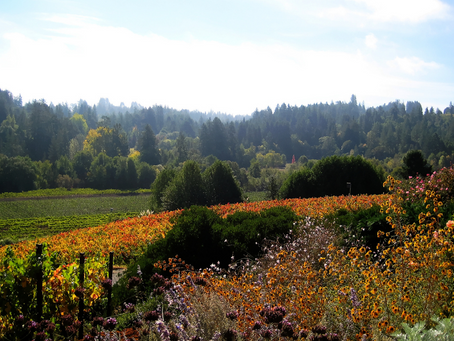 Living Happy and Healthy in Sonoma County