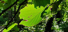 thumbnail_190909-Park Edegem C (10).jpg