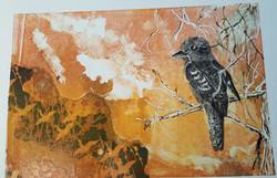 Kookaburra Birds eye view