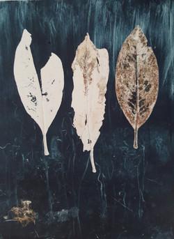 Skeleton leaves x 3