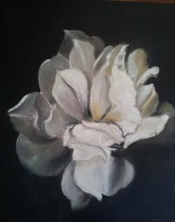 OIL - White Rose
