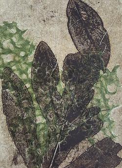 Shadow print of Green Leaf