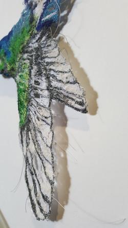 Hummingbird - view 1
