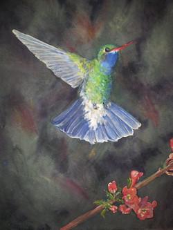 Hummingbird on dark background