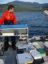 Tagging sockeye salmon