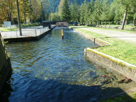 Weaver Creek Spawning Channel