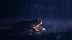 Crapaud sous la pluie