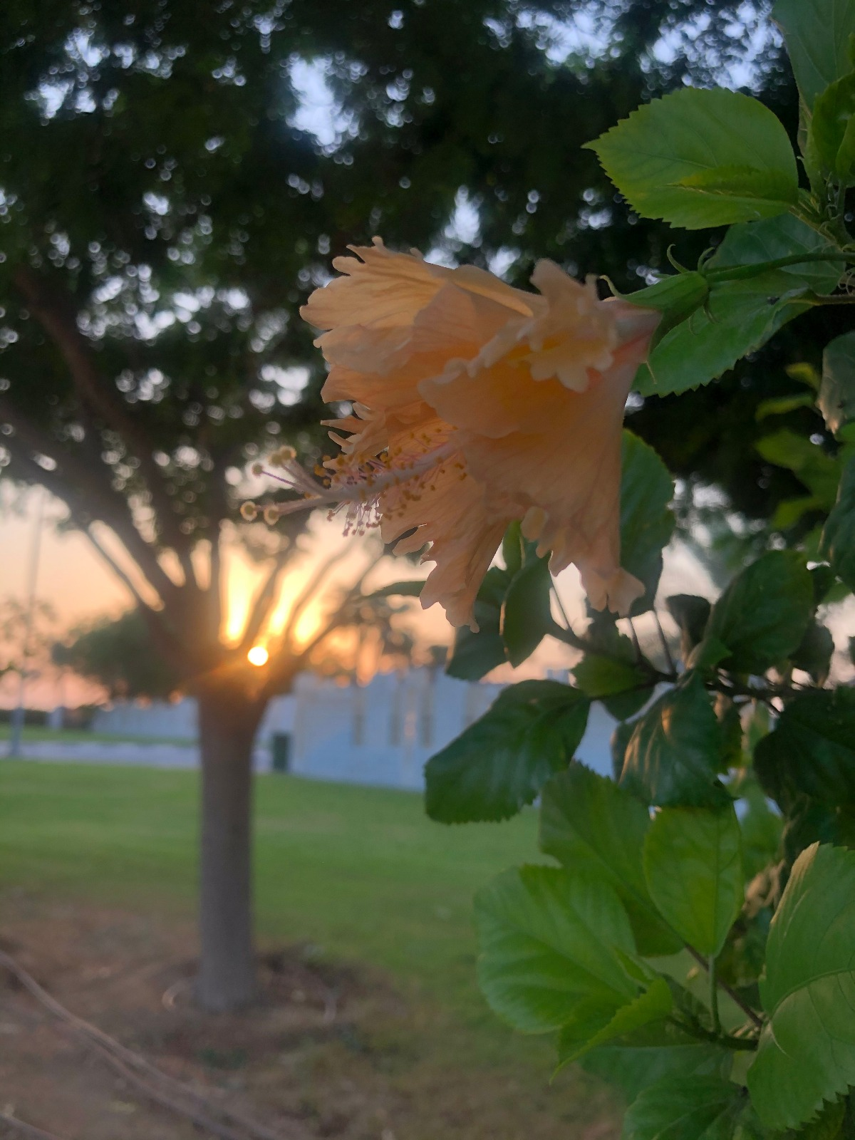 Dreamy sunset, Sleeping Flower