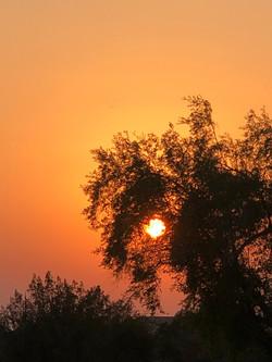 Karate Kid Sunset Much