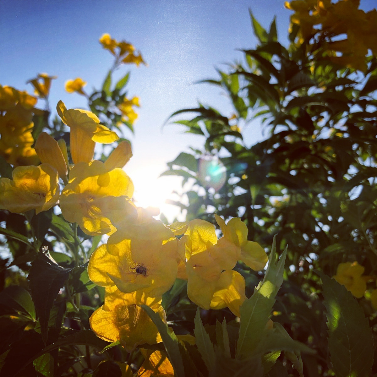 Flowers Over The Noontime Sun