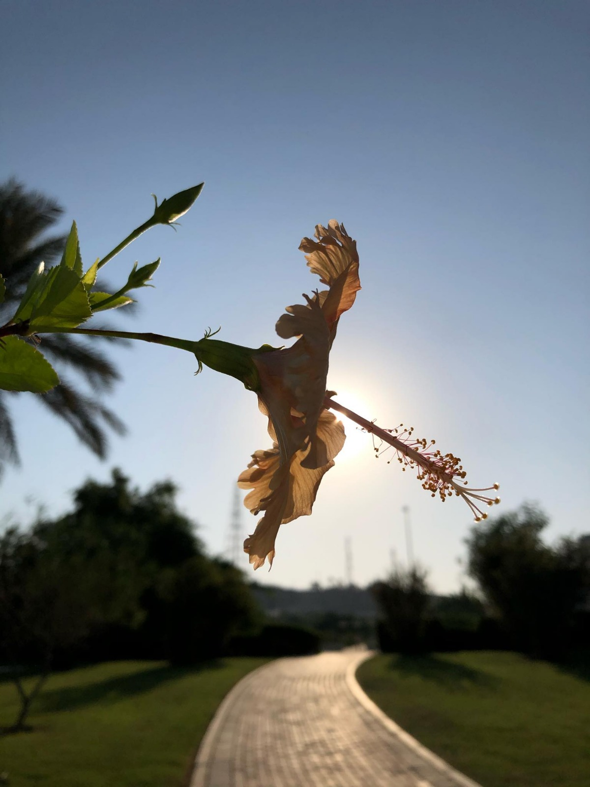 Your Journey Starts With a Flower and View of the sun