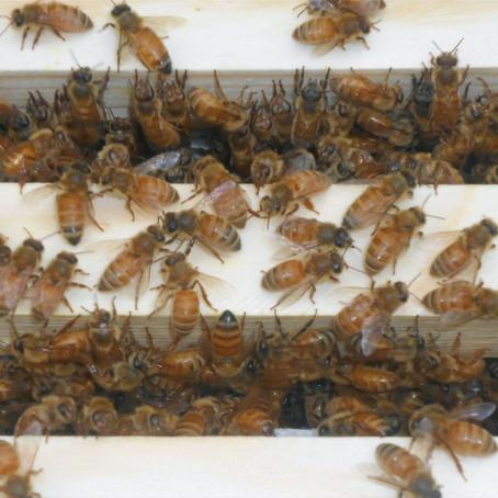Bees & Wonderland