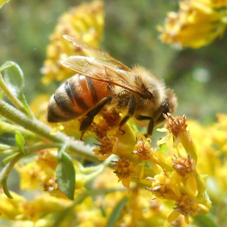 """My Time as a Backyard Beekeeper"""