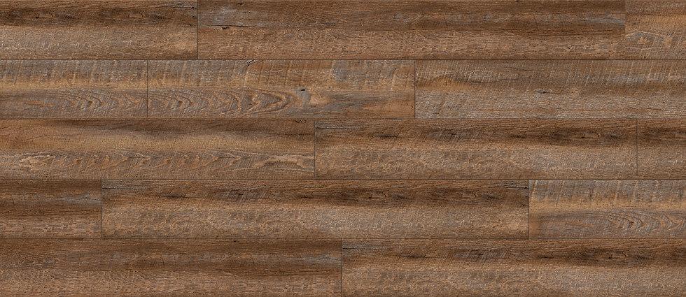 Mulberry Oak RELC9356.jpg