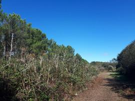 Chemin dans le marais