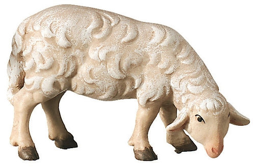 Schaf fressend, Bethlehem