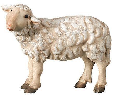 Schaf schauend, Bethlehem