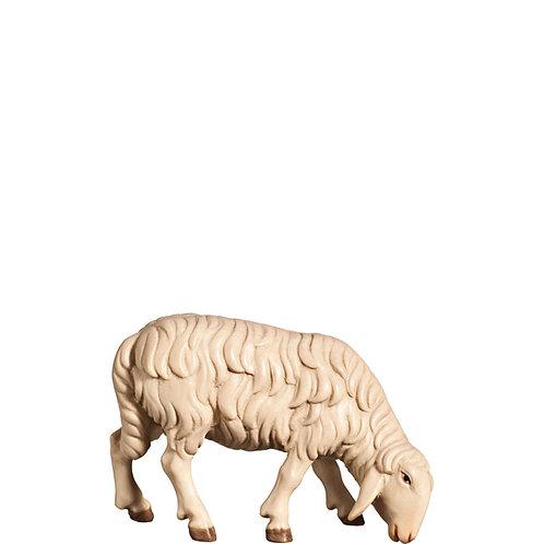 Schafe, Preis für ein Schaf