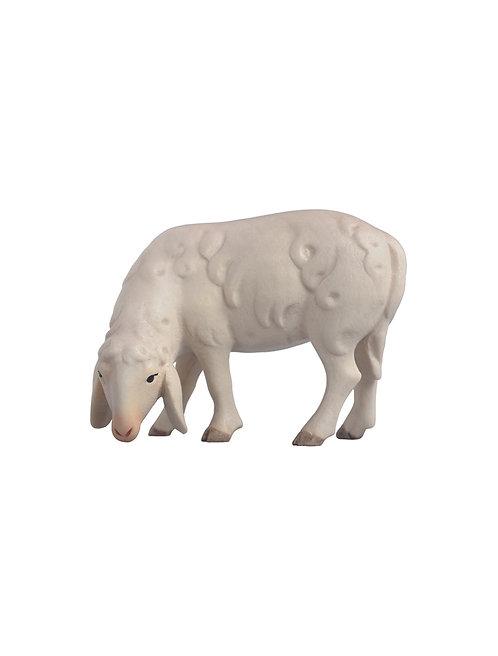 Schafe,
