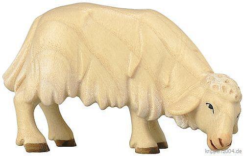 Schafe fressend, schauend, liegend.