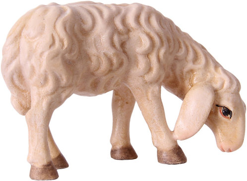 Schaf, fressend, schauend, liegend.