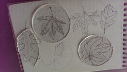 leaf pencil sketches