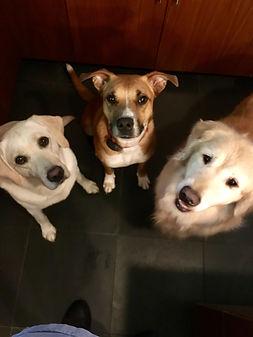 3dog pic.jpg