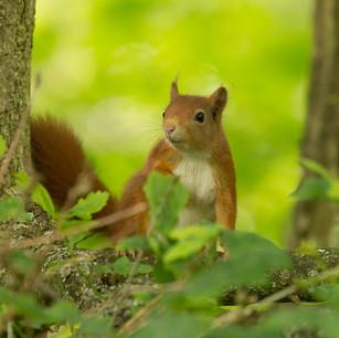 Lancashire Wildlife Trust