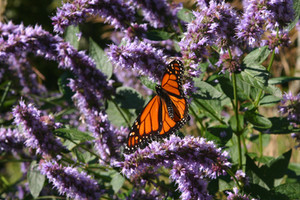The Importance of Pollinator Habitat