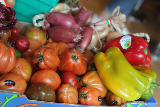 tomatoes, peppers, onions and other vegetables