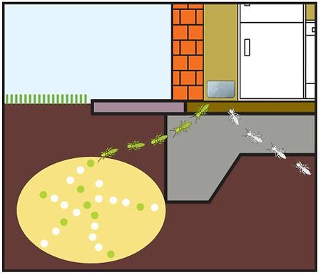 xterm termite bait AG.jpg