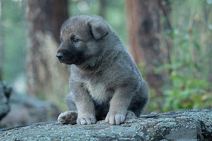 LHEyeRa.jpRocky Mountain Companion Dog
