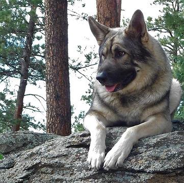 Rocky Mountain Companion Dog of Fennario August West