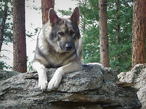 Rocky Mountain Companion Dog Fennario's August West