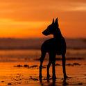 CanineInst.jpg