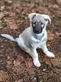 RMCD puppy.jpg